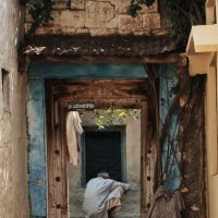 На улицах Индии 1 :: Елена Шацкова