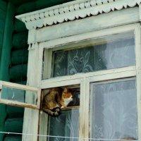 Кошки в деревенском окошке. :: Ольга Кривых