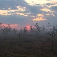 Утро на болоте :: Анатолий Хохлов