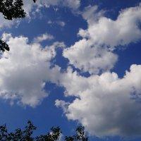 Небо. :: Антонина Гугаева