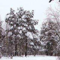 Зима :: Олег Петрушов
