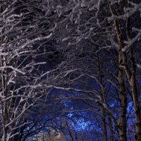 Зима :: Александр Павленко