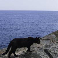 Кошка, море, два дельфина. :: Сергей Давыденко