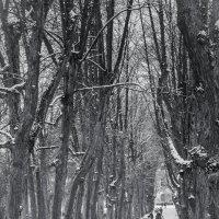 Тройная Липовая аллея :: Мария Какоткина
