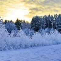 Тишина... Охраняет зимние узоры. :: Виталий Половинко