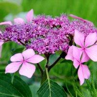США. Вашингтон. Смитсоновский Ботанический сад. :: Виктория