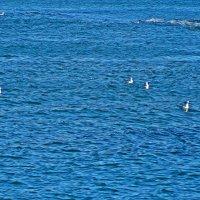 самое синее в мире Черное море... :: Александр Корчемный