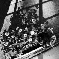 Цветы :: Евгения Л