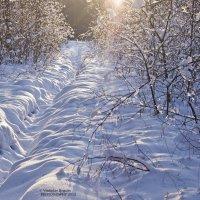 из прогулок на лыжах по лесу :: Vladislav Rogalev