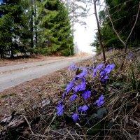 апрель, лесная дорога :: Юрий Бондер