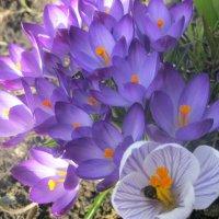 Весна :: Евгения Калинина