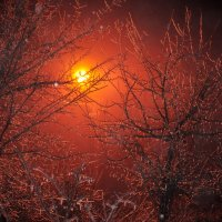 Лед на ветках :: Андрей Антаков