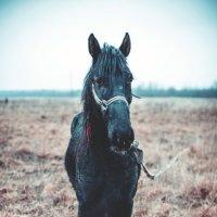 Черный конь :: Андрей Родин