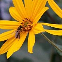 Пчёлка :: Салаватка Тазиев