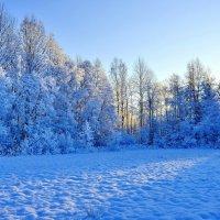 Рисунок зимы и солнца. :: Виталий Половинко