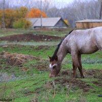Красивая лошадка :: Анастасия Никитина