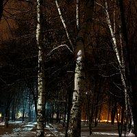 Зима в парке. :: Андрей Чиченин