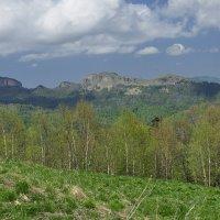прозрачный лес :: наталья Евсеева