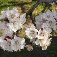 Кто со мной в весну? :: Наталья Геранина