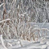 Зимний этюд :: Анатолий Тимофеев