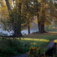 Утро туманное... Октябрь :: Юрий Цыплятников