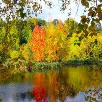 Лесное озеро :: Андрей Ягодко