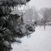В нашем городе зима... :: Наталья Тимошенко