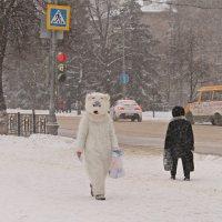 ..и пришла зима, и вышли медведи на улицы..))) :: Александр Герасенков
