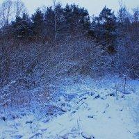 Снежный завал в лесу. :: Александр Лейкум