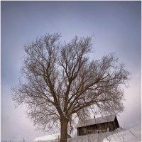 Построить, посадить, вырастить... :: Владимир Макаров