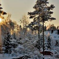 Зимнее солнце :: Leonid Volodko