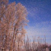 Зима-зима... :: Евгений Юрков