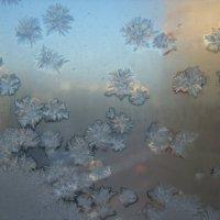 Ледяные хризантемы :: Елена Лукожева