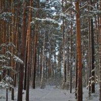 Зимний лес... :: игорь козельцев