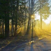 Золотой рассвет. :: Валерий Молоток