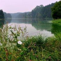 цветущая вода :: Сергей Розанов