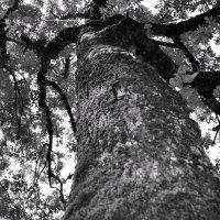 дерево :: Ник Карелин