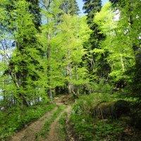 весенний лес :: наталья Евсеева