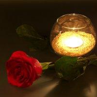Роза в свете свечей :: Сергей Канашин