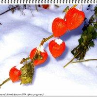 Цветы запоздалые(2) :: Валерий Викторович РОГАНОВ-АРЫССКИЙ