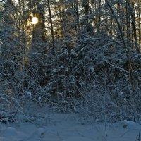 Солнце за лесом :: Яков Реймер