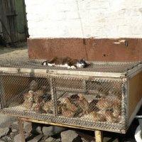 Никуда ваши цыплята не денутся! :: Алла Рыженко