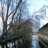 Январские отражения :: Lina Liber