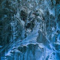 В темно-синем лесу... :: Oleg Ko