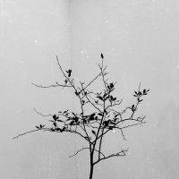 деревце :: Ильгам Кильдеев