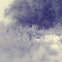 снег.. :: Alex Tyapkin