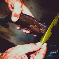 пиранья, кусает лист лучше чем ножницы :: Дмитрий Иванов