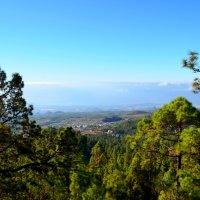 Зеленый пейзаж :: Афродита Фотолюбитель