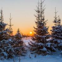 Зима :: Igor Yakovlev