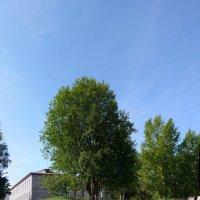 дороги :: Laryan1